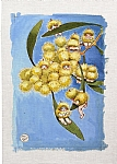 May Gibbs Wattle Babies Tea Towel